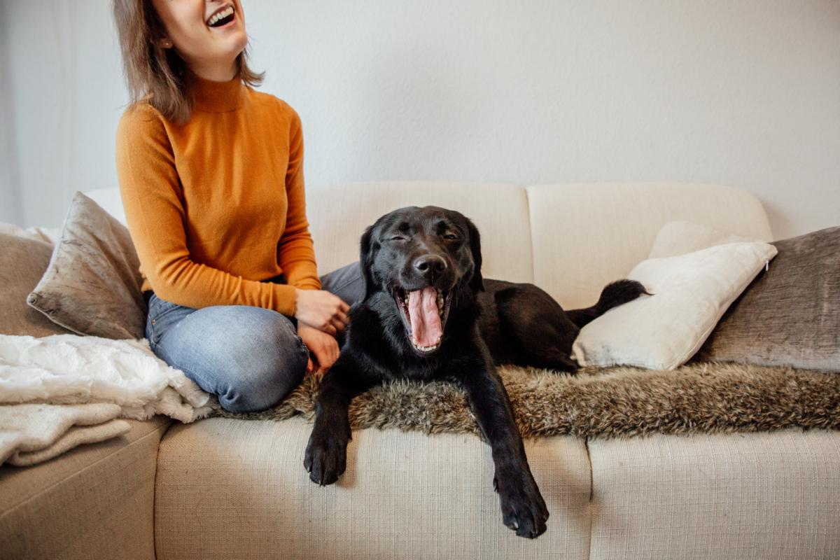 Franzis Hund Nala gähnt