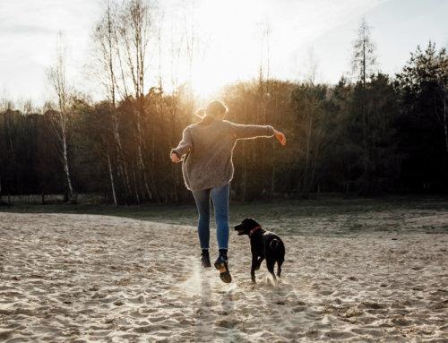 Warum dein Hund bei Jandogs mit muss